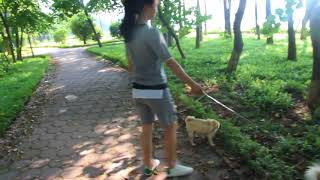Woww Amazing 2018 Beautiful Girl Playing With Dog Smart & Funny Dog#  19