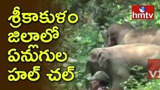 శ్రీకాకుళం జిల్లాలో ఏనుగుల హల్ చల్   Elephants Hulchul in Srikakulam District   hmtv