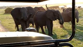 Dangerously Close Encounter with African Elephants - Chobe National Park