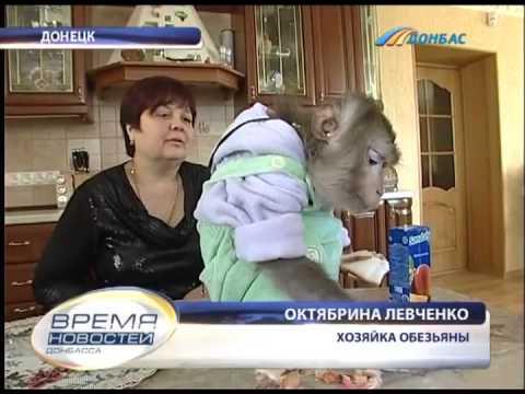 Обезьяна,закусывающая пиво шоколадом :: Очевидец Донбасса
