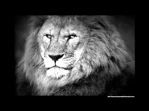 Kung - black lion