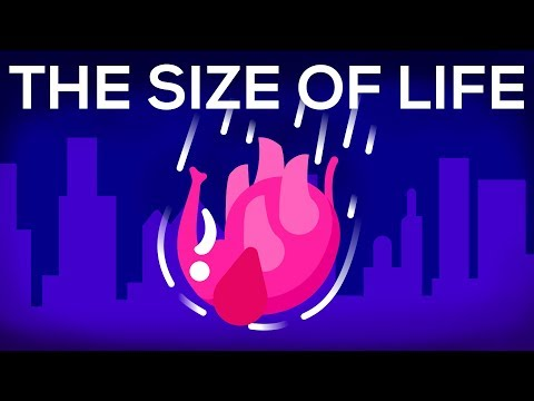 What Happens If We Throw an Elephant From a Skyscraper? Life & Size 1