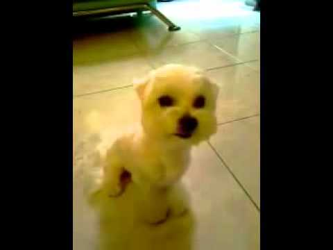 Cute Dog Smiling Cute Smiling Dog