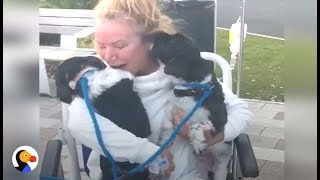 Woman Reunites With Dogs After Weeks In Hospital | The Dodo