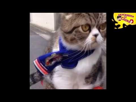Приколы с котами / Подборка приколов с котиками / Приколы COUB / # Выпуск 132