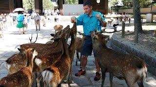Japan: Foodie Adventure in Osaka