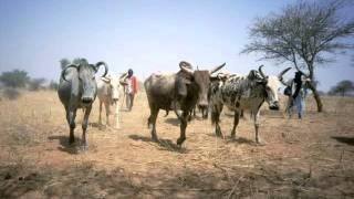 Souley Konko - El fulani