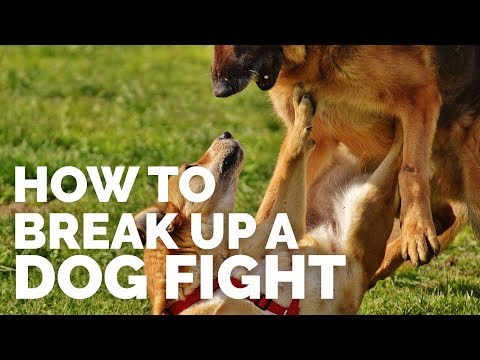 How To Break Up A Dog Fight video