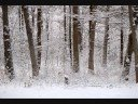 view Come Winter (The Skadi Interpretation)