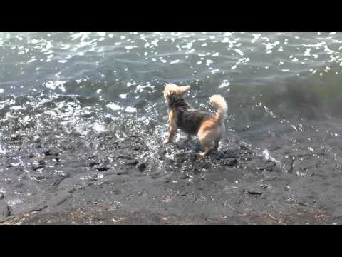 Milo Dog Trying To Swim Xxx video