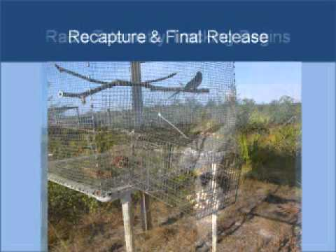 Scrub Jay Translocation and Habitat Management Cooperation: Sandra Patrick, Mosaic