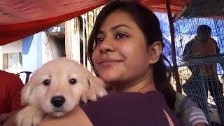 CUTE PUPPIES POM, SPITZ, LAB, GSD, GOLDEN RETRIEVER FOR DOG LOVER l DOG LOVER RUSH TO GALIFF STREET