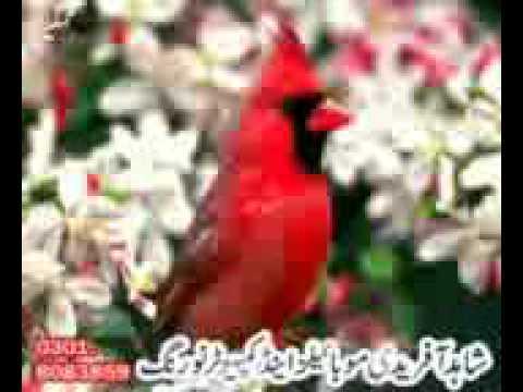 Damsaz Marwat Ta Da Dardono Pata Sa Lagi video