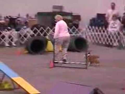 Ms. Lina (Pembroke Welsh Corgi) doing Agility