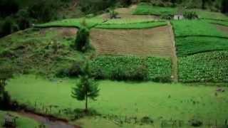 Cultivo de Hortensias en Abejorral - Antioquia - Colombia - TvAgro por Juan Gonzalo Angel