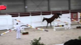 Mojito royal BK vrijspringen 2 jarigen te Gesves