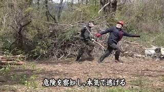 倒れてくる木から逃げる【素人集団が森林伐採して駐車場つくる vol.3】