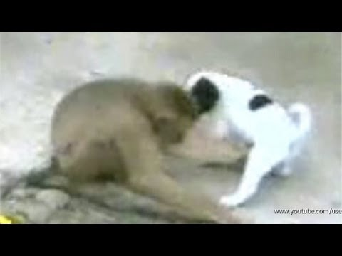 Monkey And Dog = The Best Porn Video video