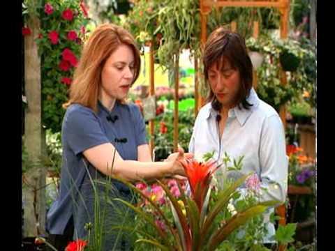 garden feng shui