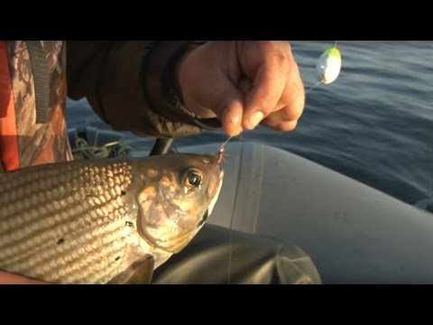енисей рыбалка балда хариус видео