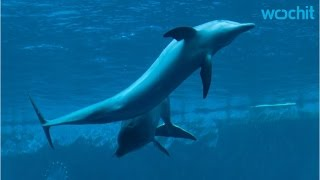 "Dolphins Speak In Sentences Up To Five ""Words"" Long"
