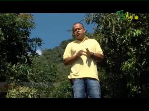 Primera Parte - Como cultivar Aguacate  Juan Gonzalo Angel - TvAgro