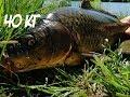 Ловля Карпа и Толстолобика  Продали 40 кг рыбы на 800р