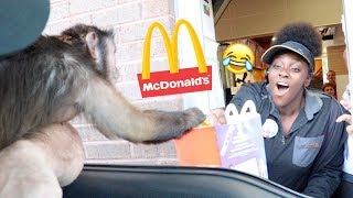 Monkey Visits The McDonalds Drive Thru!