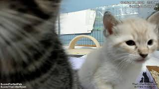 Fantastical Kittens - Kitten Close Ups to Fix the Cam