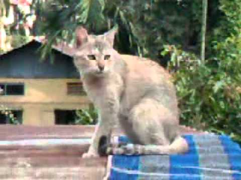 Big Pussy On The Roof. Cat Diary Trailor video