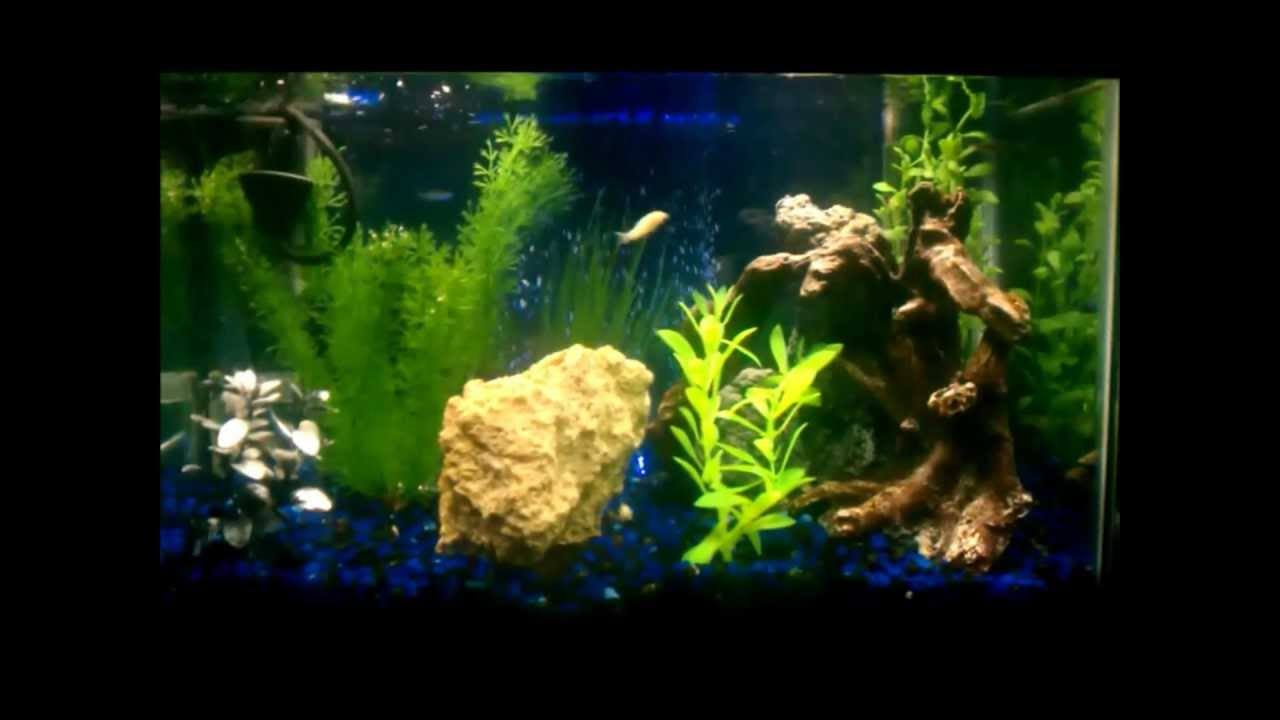 My 10 gallon aquarium with undergravel filter youtube for 10 gallon fish tank with filter