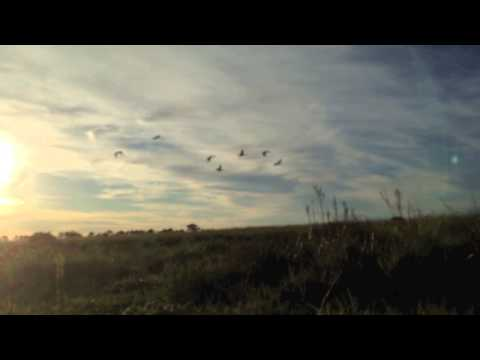 Waterfowl Wingshooting South Africa
