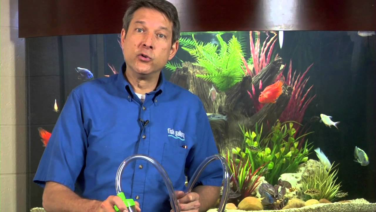 How to keep a fish tank smell down aquariums fish for Fish tank smells