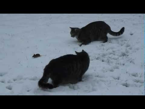 katze und maus spielen im schnee youtube. Black Bedroom Furniture Sets. Home Design Ideas
