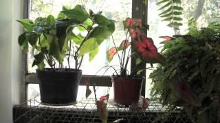 ¿Cómo cuidar las plantas?