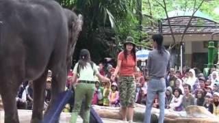 download lagu Taman Safari Indonesia Elephant Show - Wisata Bogor - gratis
