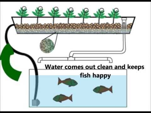 Home Aquaponics  Quick Animation