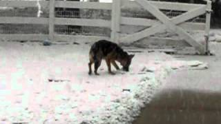 German Shepherd Snow Day