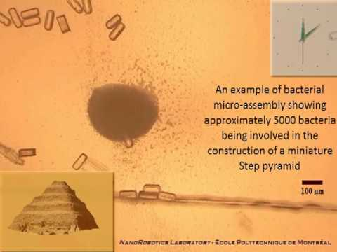 Swarm of Bacteria Builds Tiny Pyramid