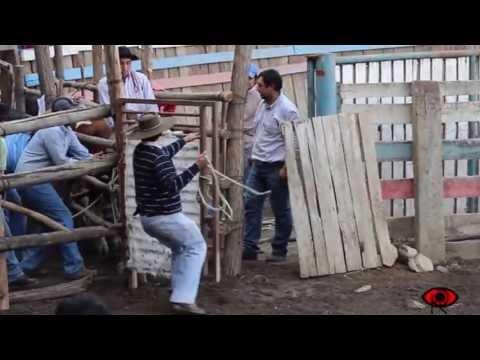 Campeonato de Domaduras y Cumbias Rancheras Doñihue-LoMiranda