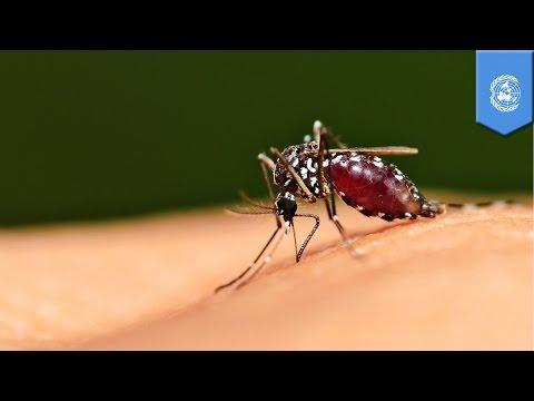 Malaria disease: WHO says malaria mortality rate almost cut by half, but Ebola can undo the progress
