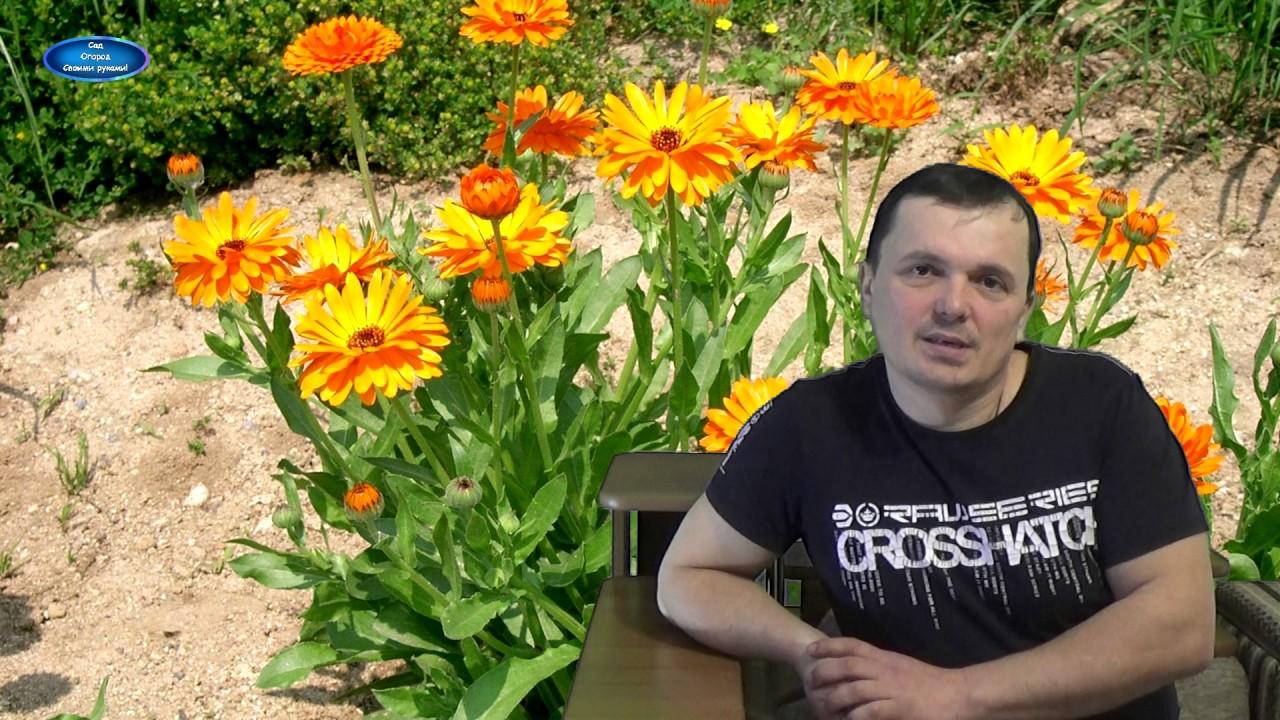Сад огород своими руками валерий кузюбердин последние новости