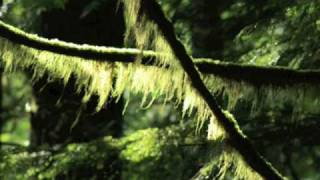 Watch Michael W. Smith Kentucky Rose video