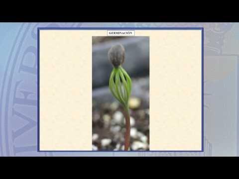Arboricultura 2.1: Reproducción: Introducción a la reproducción de las especies leñosas