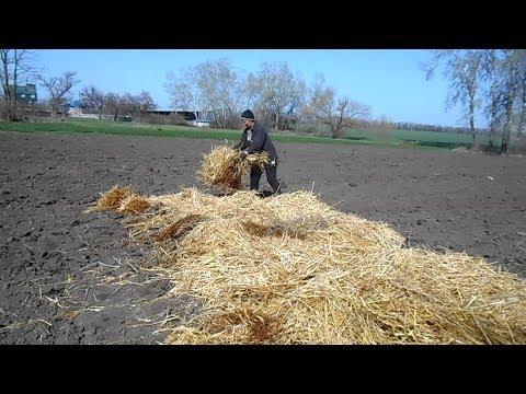 Посадка картошки под солому и обычным способом, сравнение результатов в, часть 1