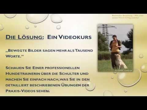 Rottweiler Erziehung - Wie Man Seinen Hund Richtig Erzieht!