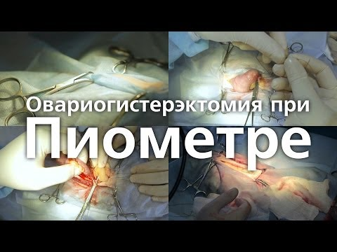 Пиометра. Овариогистерэктомия. Удаление матки у кошки