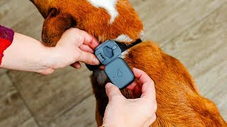 5 Best GPS Trackers for Hiking, Pet and More in 2019