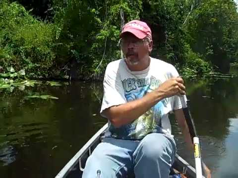 Bass Fishing The Kissimmee River