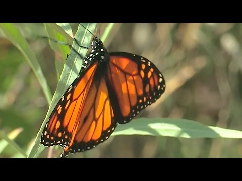 view Out of the Box - Natural Areas video